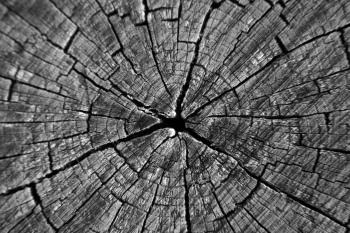 http://www.imagebase.net/Nature/treecenter